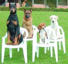Šunų dresavimas