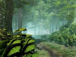Saugome mišką